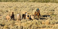 Cowboy with horses, wildwest, Oregon, USA