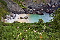 Brittany, Belle-Ile, wild coast : ferns,sea & creek of ye-yew
