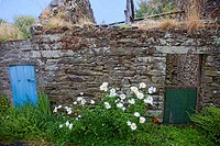 Brittany,Belle Ile island : barn and flowers
