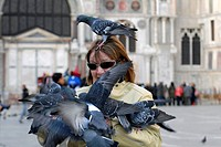 Pigeons (Columbidae) at Piazza San Marco, Venice, Veneto, Italy, Europe