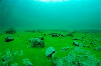 green algae in a mountain lake