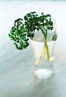 parsley in a water glass