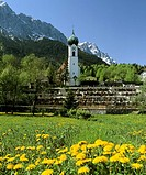 Johanneskirche Church, graves and dandelion meadow, Grainau, Upper Bavaria, Bavaria, Germany, Europe