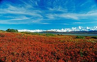 Autumn tundra with the snow_covered peaks of the Alaska Range, Denali National Park, Alaska, USA