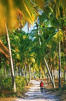 Palm trees, Zanzibar, Tanzania