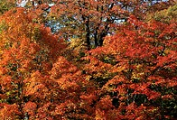 landscape autumnal, quebec, canada, usa