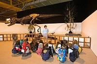 europe, italy, lombardia, cremona, exhibition of reproduction of dinosaurs, skeleton of tyrannosaur