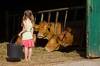 A girl in a barn with cows