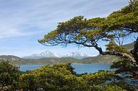Coastal Walk, Lapataia Bay, Tierra del Fuego National Park, Argentina