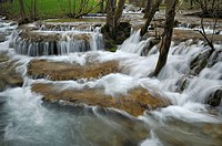 Calc-sinters, mountain stream, Swabian Alb, Baden-Wuerttemberg, Germany