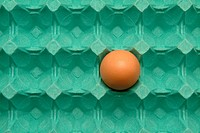 Close_up of an egg in an egg carton