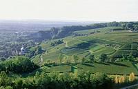 Vineyard Isteiner Kirchberg, Istein, Baden_Wurttemberg, Germany