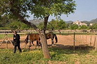 Pepe Feeding Horses, Agrotourismo Alfatx Finca Hotel, near s´Esgleieta, Mallorca, Balearic Islands, Spain