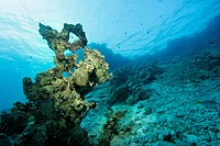 Dead coral reefs, destroyed corals, caused by waves.