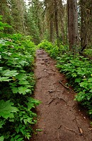 Muddy Path, Canadian Rocky Mountains (thumbnail)
