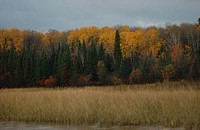 Autumn Colors at Lake of the Woods, Ontario, Canada