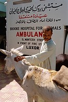 The Brooke Clinic, where all treatment for animals is free, Luxor, Egypt, North Africa, Africa