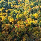 a Forest With a Bunch of Different_colored Leaves, High Angle View, Nagano Prefecture, Japan