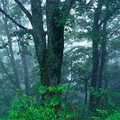 a Tree in the Forest, Surrounded By Fog and Mist, Low Angle View