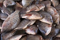 Close_Up, Fish Market, Fish, Dead Animal, Abundance