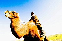 A Mongol man rides his double hump / Bactrian camel