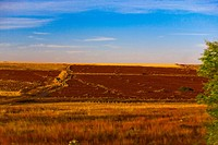 Panoramic view of a landscape, Zacatecas State, Mexico