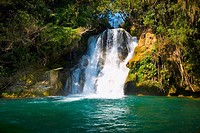 Waterfall in a forest, Tamasopo Waterfalls, Tamasopo, San luis Potosi, Mexico (thumbnail)