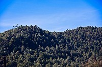 Trees on a hill, San Cristobal De Las Casas, Chiapas, Mexico