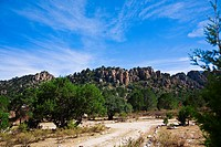 Trees in front of rock formations, Sierra De Organos, Sombrerete, Zacatecas State, Mexico