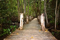 Boardwalk passing through a forest, Cambay Spring, Celestun, Yucatan, Mexico