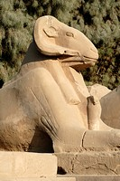 Ram headed sphinx, Temple of Karnak, near Luxor, Thebes, UNESCO World Heritage Site, Egypt, North Africa, Africa