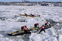 Ice canoe races on the St. Lawrence River during winter carnival, Quebec, Canada, North America