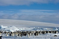 Colony of emperor penguins Aptenodytes forsteri, Snow Hill Island, Weddell Sea, Antarctica, Polar Regions
