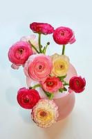 Ranunculus in pink vase