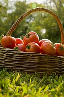 Basket of fresh tomatoes on grass