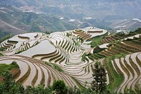 China Guangxi Province Guillin Longshen terraced rice fields