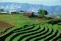 Terracing on small farm, Godet, Haiti, West Indies, Caribbean, Central America