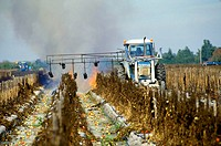 Burning off old field of tomatoes to prepare for new planting Ruskin Florida