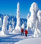 Skiers in Lapland