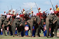 Elephants at festival, Surin, Thailand, Southeast Asia, Asia