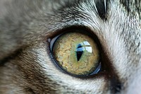 Cat's eye close up
