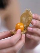 close_up physalis