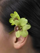 orchid blossom behind the ear