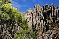 Tsingy of Bemaraha (thumbnail)