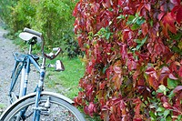 Bicycle parked next to hedge
