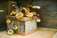 Withering strawflowers in planter (thumbnail)