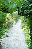 Footpath lined with lush foliage (thumbnail)