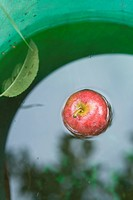 Apple floating in water