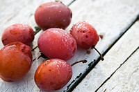Dew-covered ripe plums