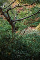 Tree and undergrowth (thumbnail)